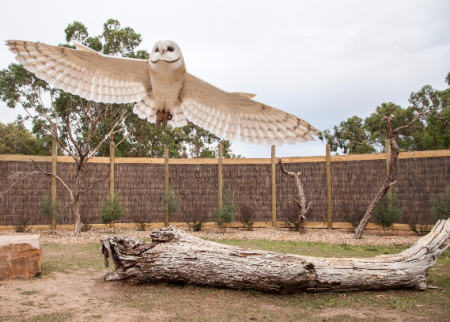 Get close to Australian animals at Moonlit Sanctuary