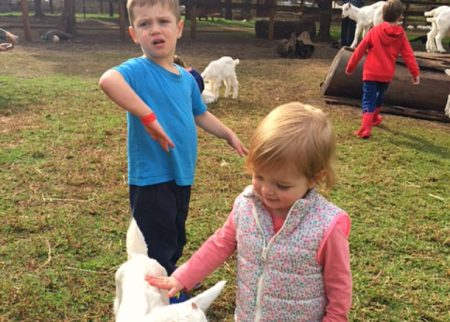 Fun at Swan Valley Cuddly Animal Farm