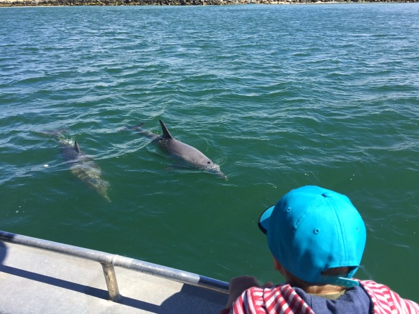 Dolphin Eco Cruise Margaret River