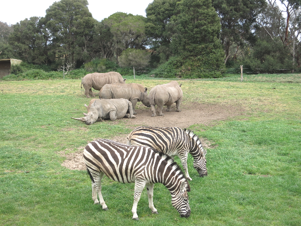 Werribee Open Range Zoo Melbourne