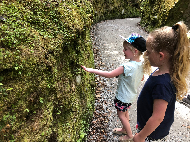 Fun nature walks kids New Zealand