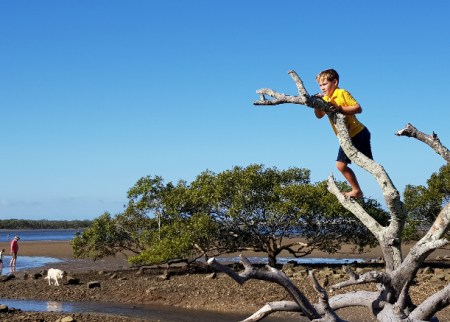 Australian Wetlands For Kids – Take a Mangrove Walk!