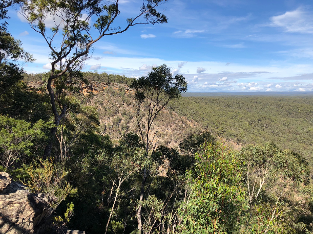 Bluff Reserve in the Blue Mountains