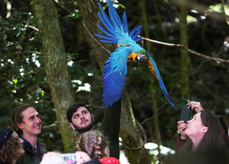 Take flight at Scenic World these school holidays